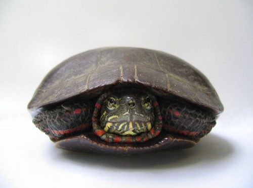 Frightened Turtle